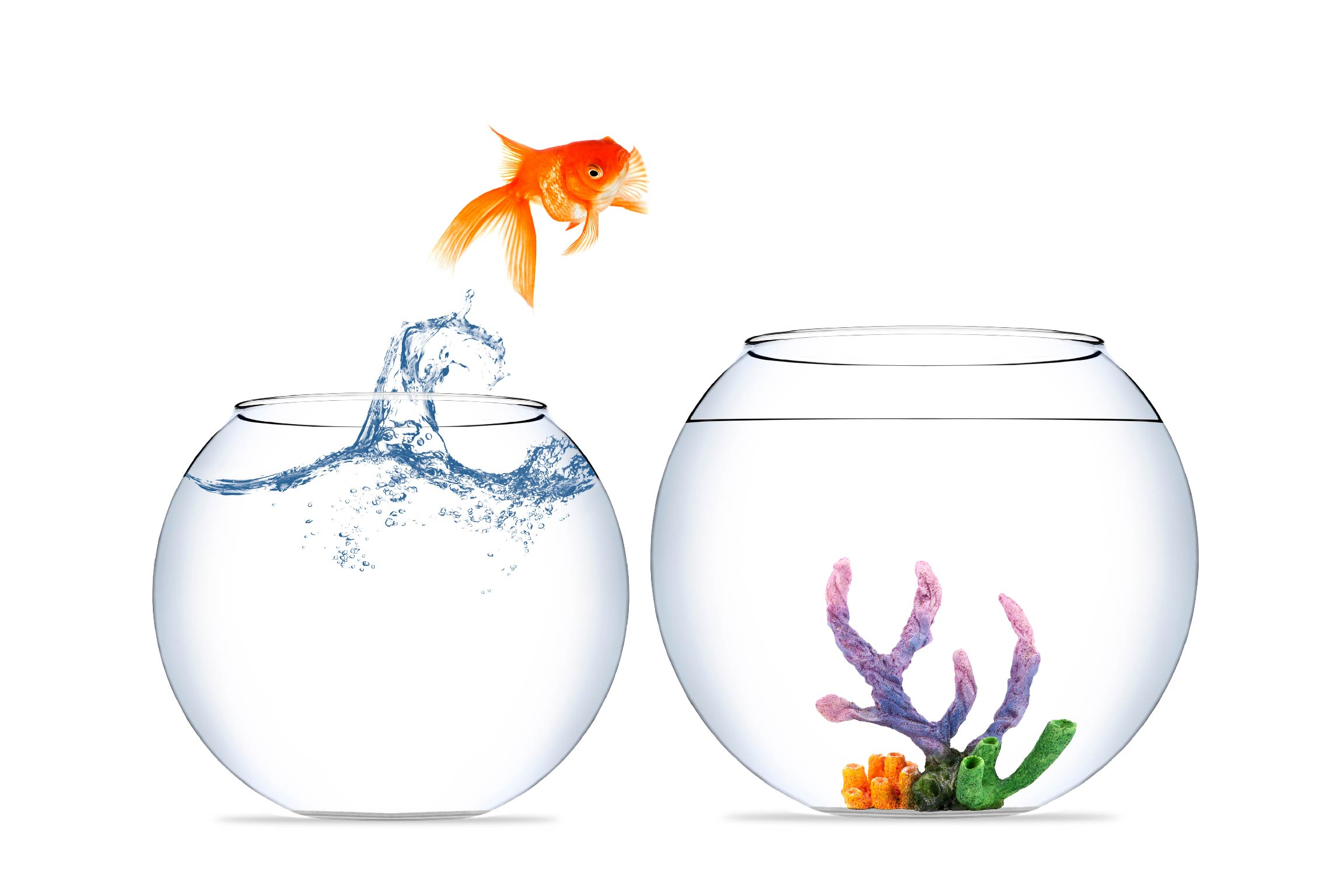 how to upgrade from google docs to nutshell goldfish jumping out of bowl