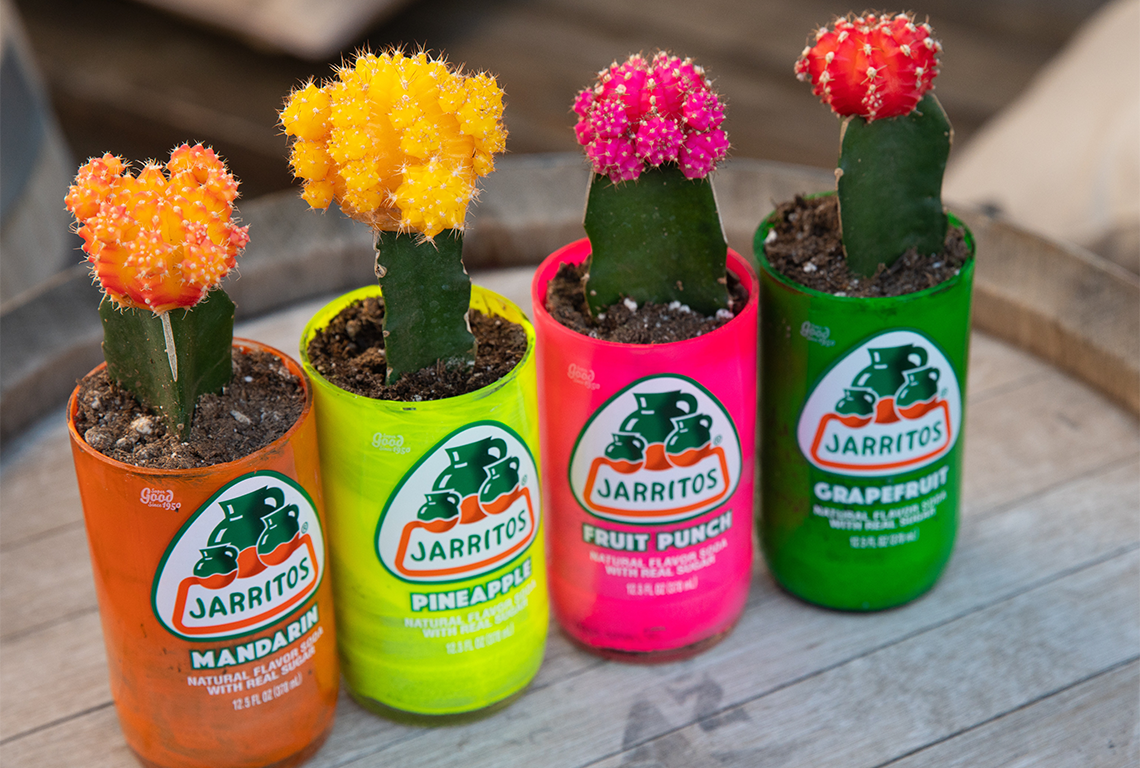 repurposed jarrito bottles with fowers growing out of them